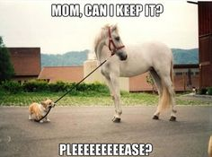 I want both! #ArabianHorseAssociation Cute Horse Pictures, Funny Corgi Pictures, Corgi Funny, Funny Farm, Dog Pictures, Funny Dogs, Funny Animal Pictures, Hilarious Pictures, Animal Pics