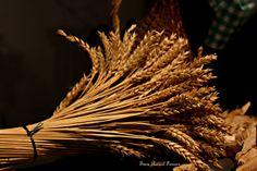 Museu do Pão Dandelion, Flowers, Plants, Museum, Dandelions, Taraxacum Officinale, Royal Icing Flowers, Flower, Florals