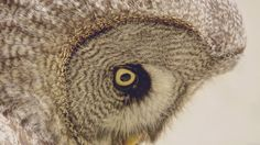 Wallpaper: http://desktoppapers.co/mm84-owl-eye-animal-nature/ via http://DesktopPapers.co : mm84-owl-eye-animal-nature