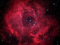 The Rosette Nebula is not the only cosmic cloud of gas and dust to evoke the imagery of flowers -- but it is the most famous. At the edge of a large molecular cloud in Monoceros, some 5,000 light years away, the petals of this rose are actually a stellar nursery whose lovely, symmetric shape is sculpted by the winds and radiation from its central cluster of hot young stars.