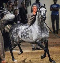 Image result for diy horse walker plan