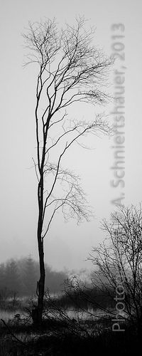 brouillard dense |{;;