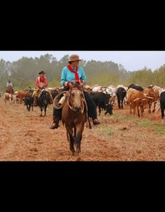 Cattle Drive Gal by Cynthia Daniel Wolf. Photograph of the Centennial Oklahoma Cattle Drive Cattle Drive, Art Through The Ages, Cowboy And Cowgirl, Western Art, Native American Art, Cynthia Daniel, Rodeo, Westerns, Museum