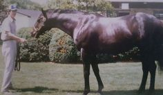 This year marks the 40th anniversary of Seattle Slew's Triple Crown. The big, black stallion was the first and remains the only undefeated Triple Crown winner in history and ranks as one of the most beloved racehorses and stallions of the past 50 years. Though purchased for just $17,500 as a yearlin