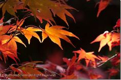 7 Photography Tips for Great Autumn Images