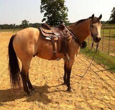 Jamie's future horse Kamin