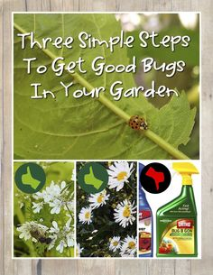Three super simple steps will have your garden crawling (literally!) with beneficial insects. Draw in insect friends for a more bountiful, healthy garden.
