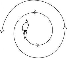 Spiral Exercise Illustration