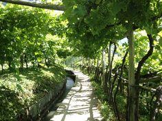 Südtirol , Algunder Waalweg, Italy