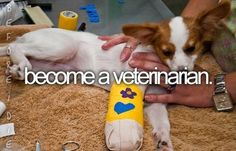 Become A Vet