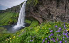 Southern Iceland | Seijalandsfoss and Flowers. Southern Iceland. - Gallery-2 - Mike ...