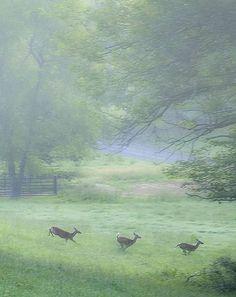 Deer bounding through a meadow