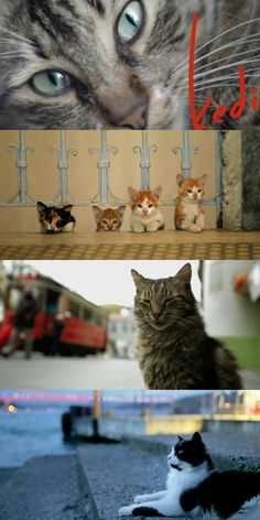 Kedi Documentary (2016) Documentary 'Kedi' About Istanbul's Street Cats