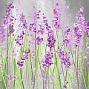 Lavender Blossoms - Lavender Field Painting Poster by Lourry Legarde