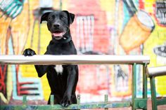 Pet Business Profiles | McGraw Photography