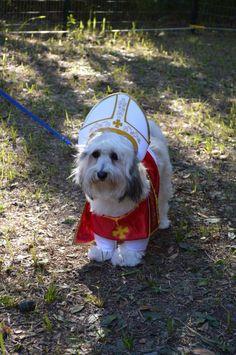 Pope Benny, costume contest winner!