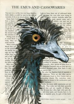 Week feather emu in ink and watercolour with collage on vintage book page by Judy Watson illustrator Vintage Book, Art Prints, Simple Art, Painting, Illustration Art, Art, White Gouache, Artsy, Feather