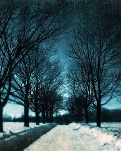 Winter Photography - Snowy Trees - Montreal Art - Blue Nature photography - 8x10 Print - Winter's Breath