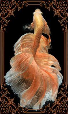 Qhd Wallpaper, Fish Wallpaper, Fish Gif, Beautiful Tropical Fish, Betta Fish Types, Mermaid Wallpapers, Wallpaper Nature Flowers, Pretty Fish, Beautiful Sea Creatures