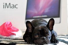 Mac Dog