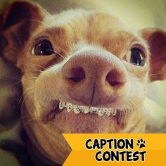 """""""The orthodontist said this was like obedience school for my teeth!"""" Give us your best caption for this picture!  Palm Valley Pediatric Dentistry"""