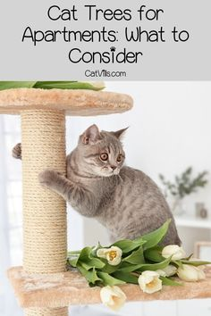 Looking for the best cat trees for apartments? Check out our top 5 picks that fit small spaces, including wall-mounted & modular systems Cool Cat Trees, Cool Cats, Kittens Playing, Cats And Kittens, Cat Friendly Plants, First Time Cat Owner, Cat Grass, Cat Hacks, Kitten Care