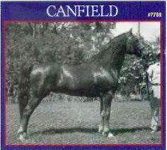 Canfield, uno de los sementales sobre los que se fundó la raza American Morgan Horse