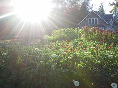 Grower Spotlight | Sweet Luck Farm
