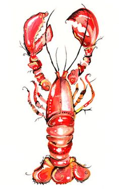 Lobster watercolor