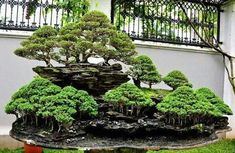 BONSAI expression
