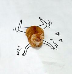 Doodle-Cat-14