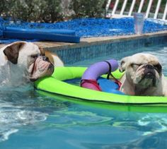 Puppy Raft!!! For those pups who aren't great swimmers, but still need to cool off in the water.