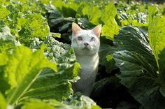Fukumaru enjoying the greenery.