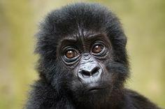 scoop.itLa menace de l'exploitation pétrolière continue de peser sur le parc national des Virunga, la plus vieille réserve naturelle d'Afrique, dans l'est de la République démocratique du Congo, même après l'annonce de l'abandon des projets d'une société...