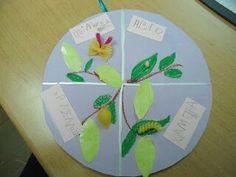Κύκλος πεταλούδας