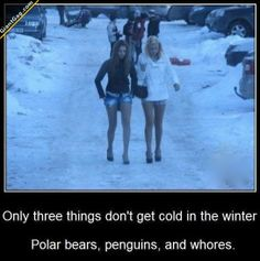 Only Three Thing Don't Get Cold In Winter, Polar Bears, Penguins And ... | Click the link to view full image and description : )