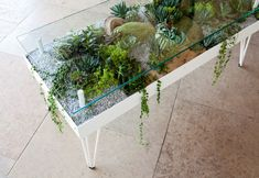 top coffee table terrarium garden > home decor > nature in the home > plan., Glass top coffee table terrarium garden > home decor > nature in the home > plan., Glass top coffee table terrarium garden > home decor > nature in the home > plan. Coffee Table Terrarium, Glass Top Coffee Table, Coffee Tables, Garden Coffee Table, Garden Table, Coffee Table Aquarium, Dining Tables, Coffee Chairs, Living Furniture