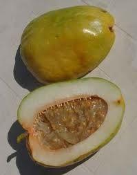 Granadillo maduro. El jugo de esta fruta es riquísimo. Lástima que no aparezca por aquí.