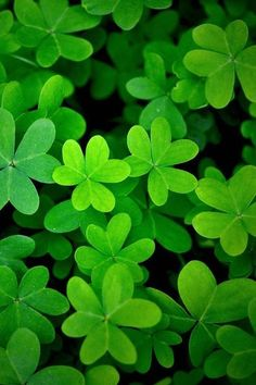 Wall paper green leaves colour 68 Ideas for 2019 World Of Color, Color Of Life, Go Green, Green Colors, Photographie Macro Nature, Impression Poster, Green Plants, Green Leaves, Black Leaves