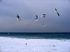 sea&snow