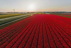 One month ago, Sergey Shandin and I went to Holland to photograph tulip fields, among other things. However, the unusually warm spring almost ruined our plans. When we arrived at the famous Keukenhof Park, featured in practically every travel guidebook, we realized that there were almost no tulips left to shoot: park workers were cutting the remaining flower fields right in front of us. Needless to say, we immediately flew our helicopter and took some pictures, but the result was rather…