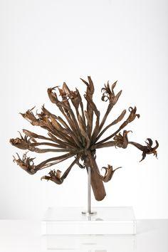 Nic Bladen / Brunsvigia orientalis / bronze / 34 cm high