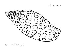 printable pictures of sea shells coloring page printout junonia - Seashell Coloring Pages Printable