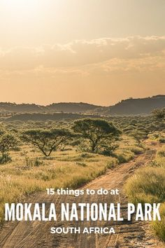 15 things to do at Mokala National Park, Northern Cape, South Africa