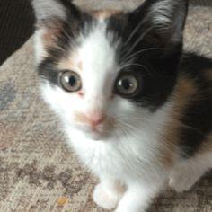 greeneyesintheimpala:  Meow