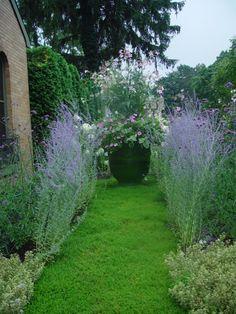 gorgeous container garden!