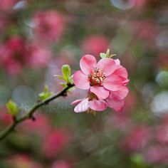 Macro - Blossom | by Ray Wise