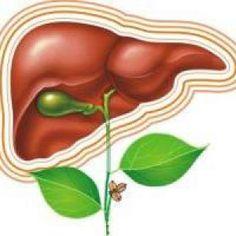 Профилактика заболеваний печени