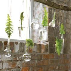 Foliage Hanging Vases - this picture is my happy place. Eclectic Vases, Olive And Cocoa, Window Plants, Hanging Vases, Hanging Plants, Inside Garden, Bookshelf Design, Tips & Tricks, Bottles And Jars