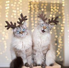 Santas Dears haha//